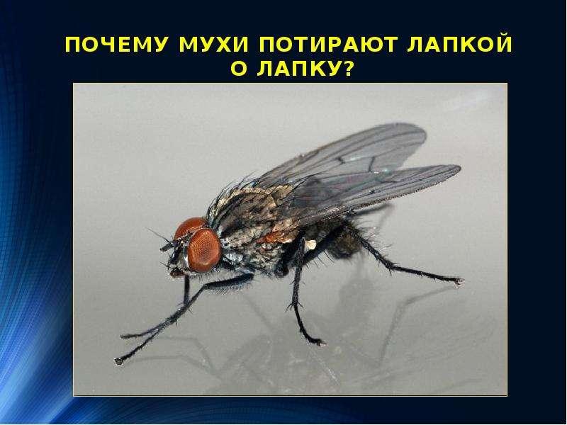 Уникальность лапок мухи