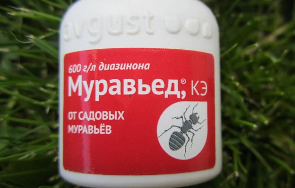 10 эффективных отрав от муравьев: как потравить муравьев или муравейник
