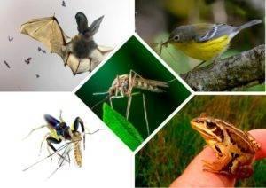 Сколько живут обыкновенные комары и как они размножаются