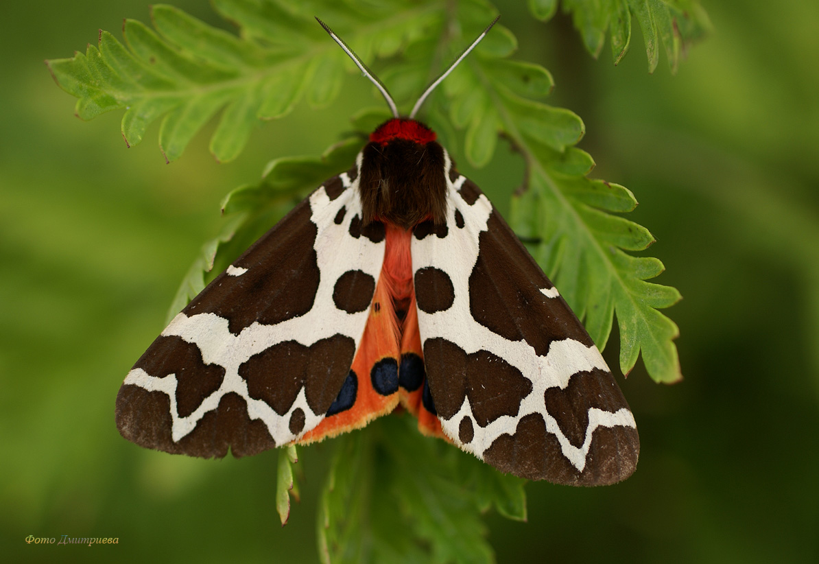 Виды ядовитых бабочек и их описание