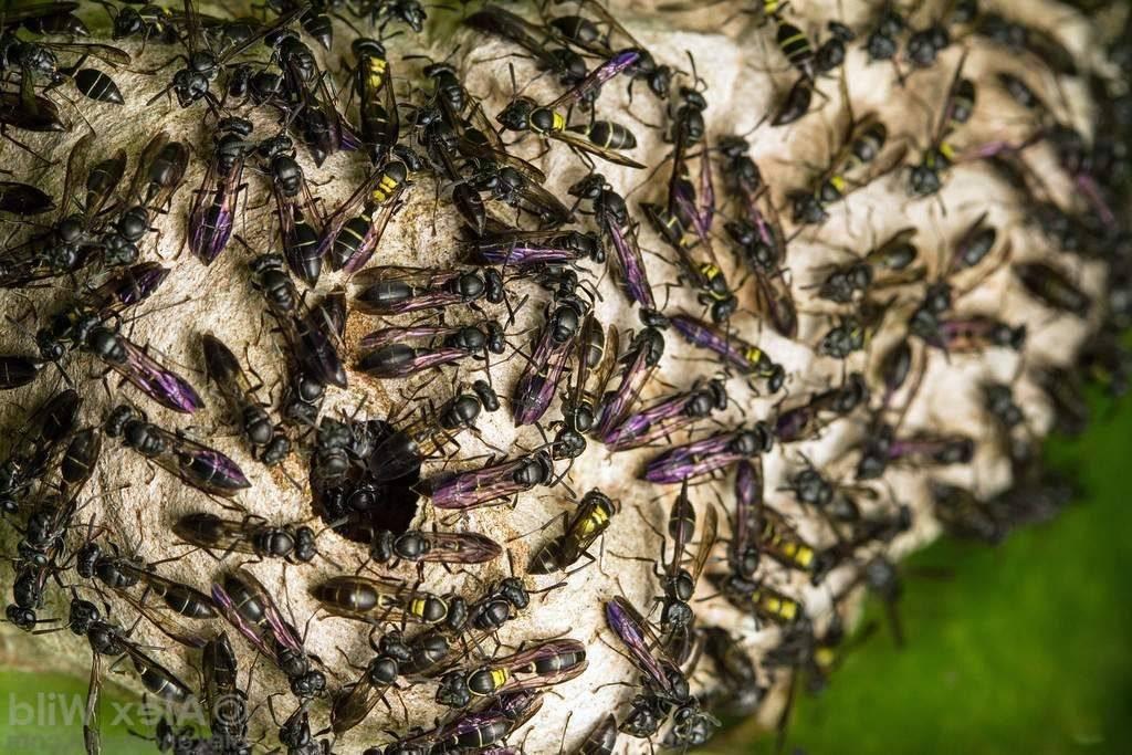 Самые интересные факты о пчёлах, осах и шмелях