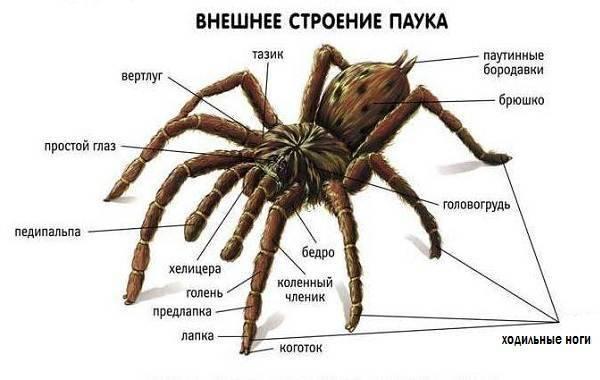 5 интересных фактов о пауках