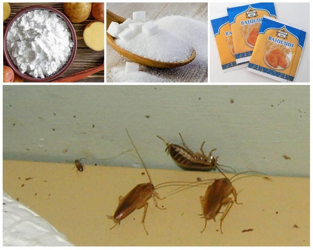 Как избавиться от тараканов: 9 средств для их уничтожения - домашних и покупных
