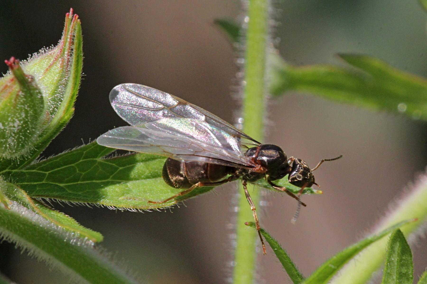 Как избавиться от летающих муравьев быстро и эффективно