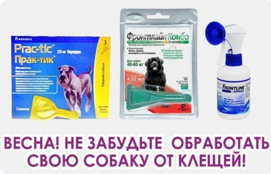 Спреи для собак от блох и клещей: 10 самых эффективных средств