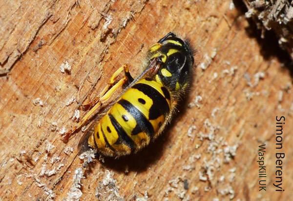 Ok google спят ли насекомые. где зимуют осы, спят ли насекомые в холодный период года? снятся ли животным сны