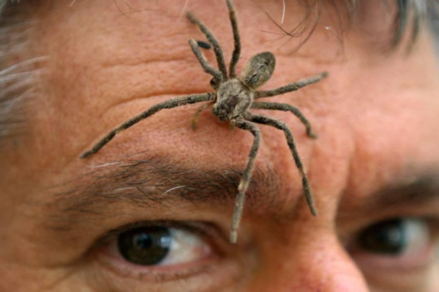 Что означает, если паук ползет вниз
