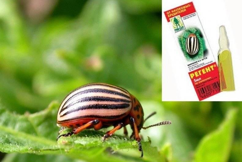 Инсектицид регент - инструкция по применению