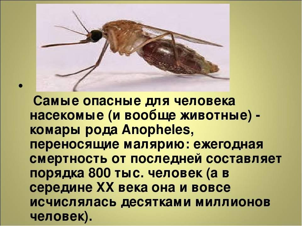 Интересные факты о тараканах — что мы знаем об этих насекомых