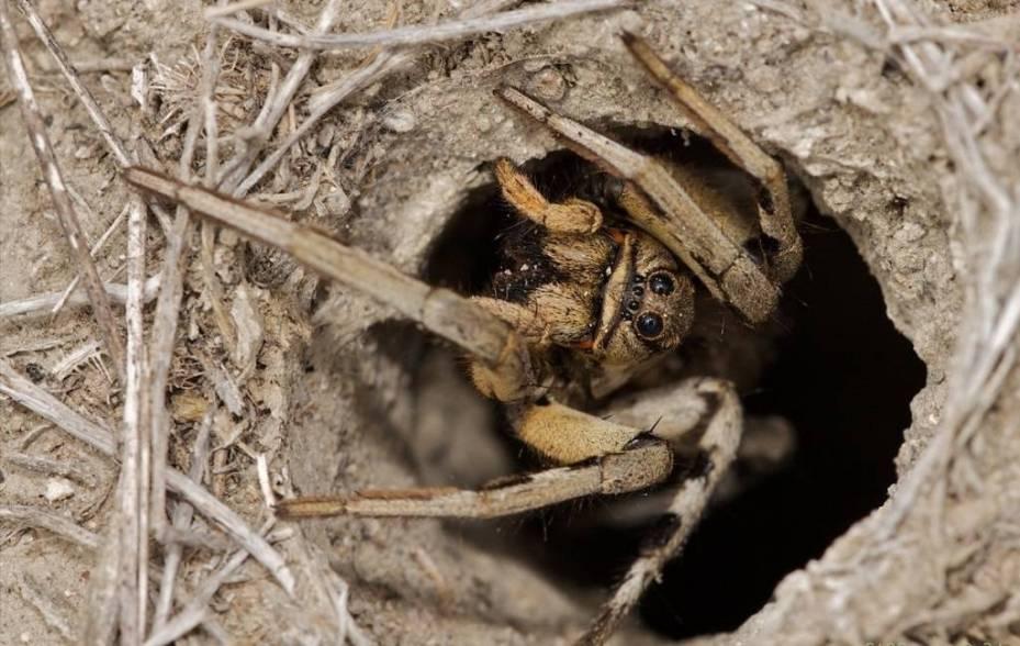 Содержание пауков в домашних условиях: выбор питомца и обустройство террариума
