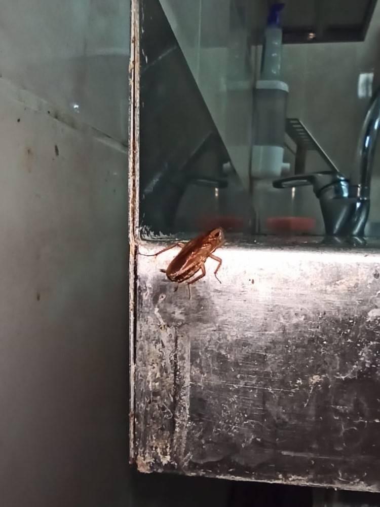 Как уничтожить тараканов в квартире навсегда в домашних условиях?