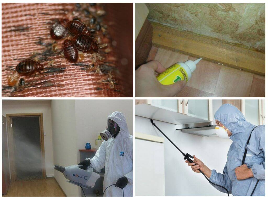 Средство для уничтожения тараканов в квартире