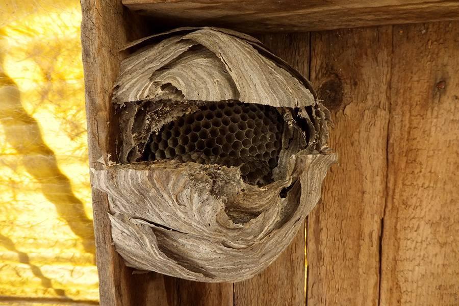 Осиное гнездо для привлечения денег. приметы про ос: поверья, проверенные годами | всё об интерьере для дома и квартиры