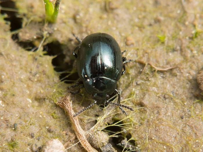 Как бороться с болезнями и насекомыми-вредителями, которые появились на хрене
