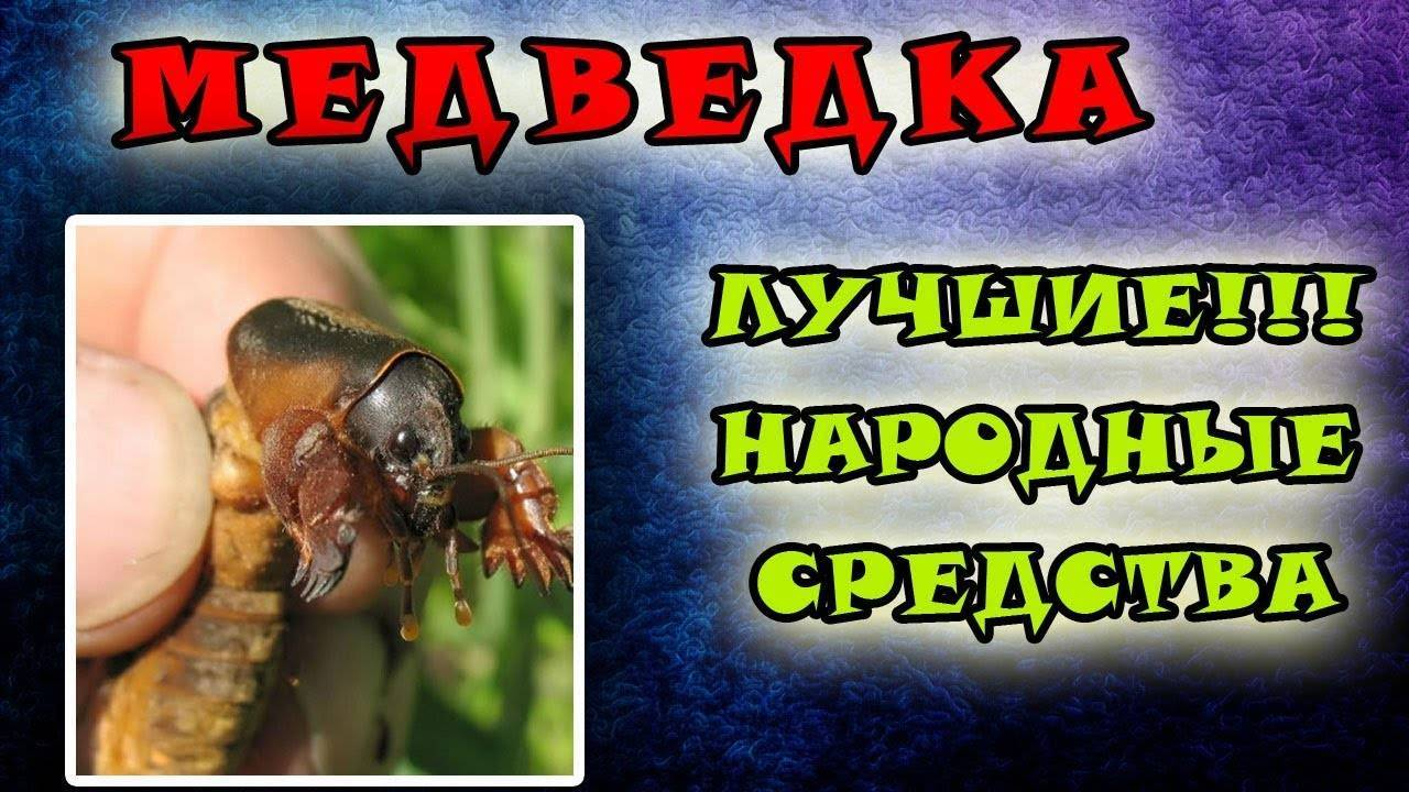 Как избавится от медведки навсегда (все способы) - удобряшкин.ру