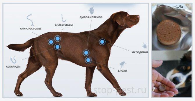 Спреи для собак от блох и клещей