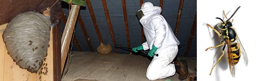 Как избавиться от шершней под крышей дома, на даче и прочих местах