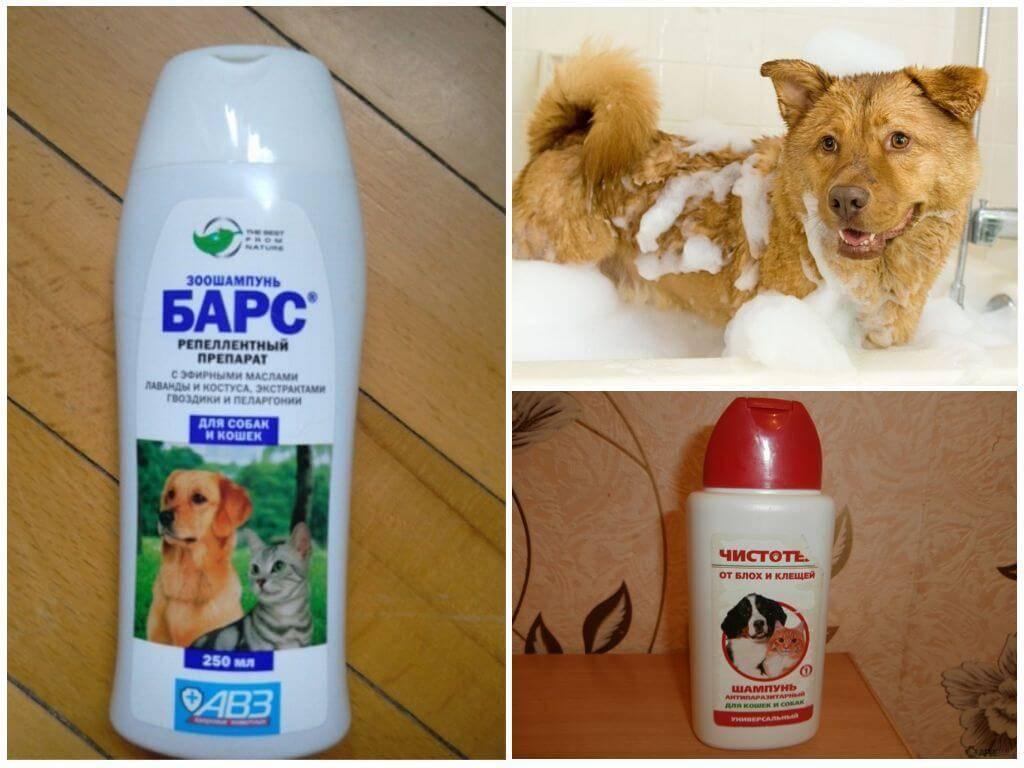 Помогают ли шампуни от блох для собак? все «за» и «против»