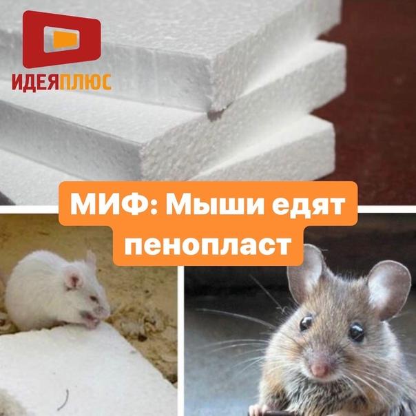 Способы защиты пенопласта от грызунов: как защитить от мышей и крыс