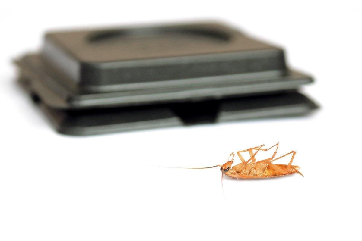 Самые эффективные способы избавиться от тараканов в общежитии, отзывы и советы