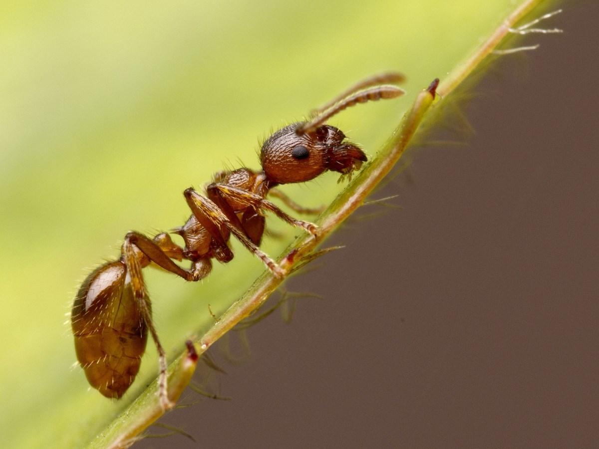 Чего боятся муравьи — разбираем во всех подробностях