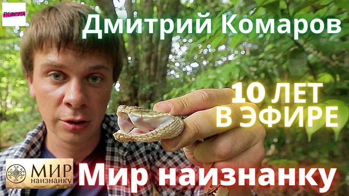 Как комары изменили мир? - hi-news.ru