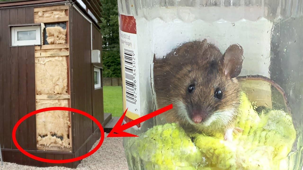 Как защитить каркасный дом от грызунов: методы борьбы с крысами и мышами
