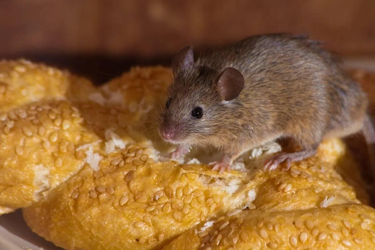 Что едят летучие мыши, чем питаются в естественной среде обитания русский фермер