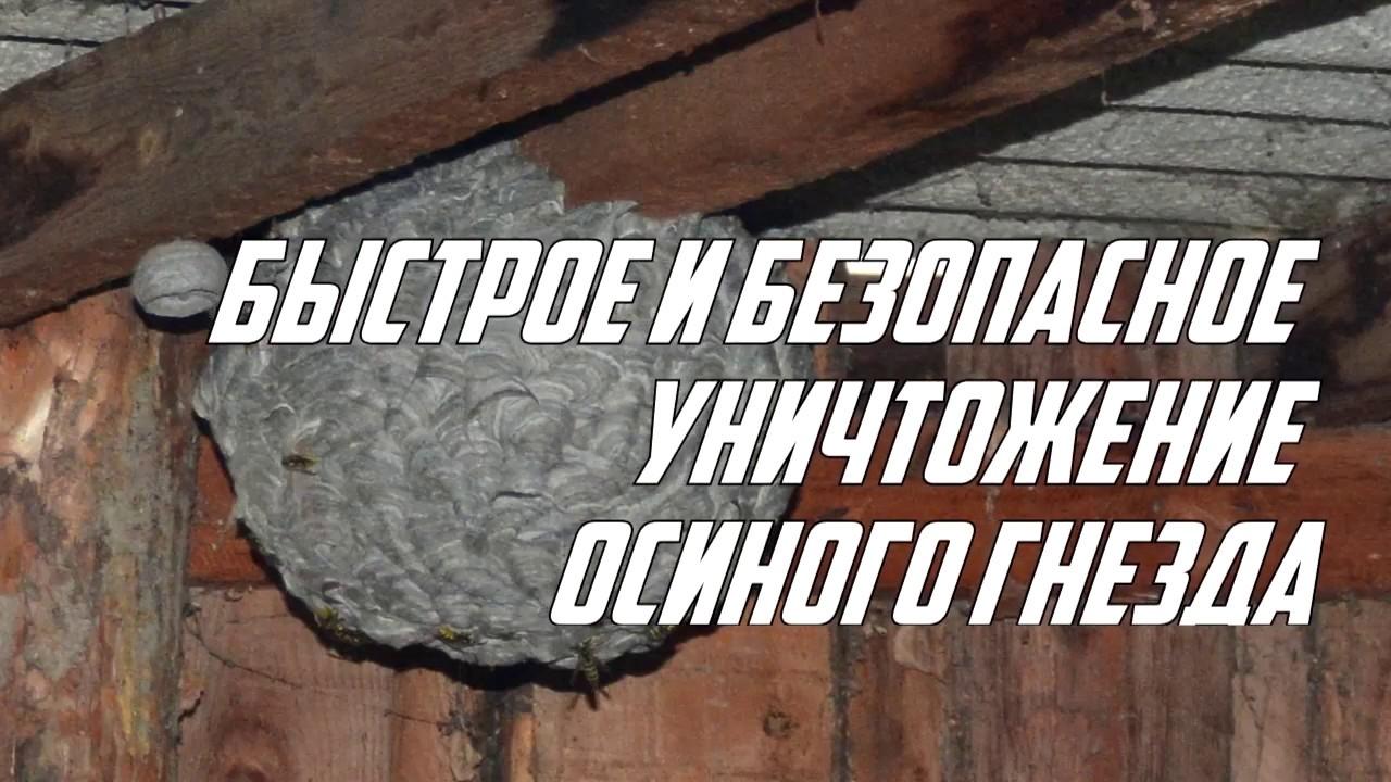 Эффективные способы уничтожения осиныхгнёздна даче