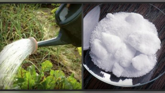 Применяем борную кислоту в саду и огороде - огород, сад, балкон - медиаплатформа миртесен