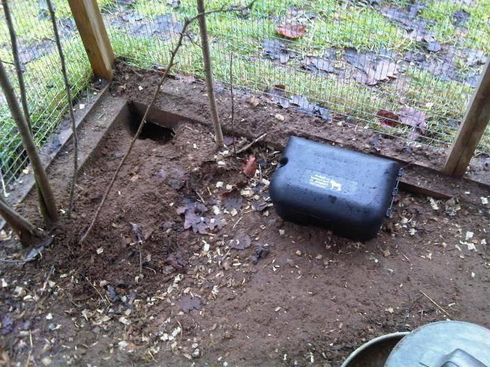 Пошаговая инструкция как избавиться от мышей и крыс в погребе, что грызут картошку