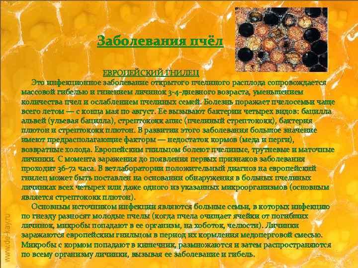 Пчелы карника: особенности, описание породы и их характеристика