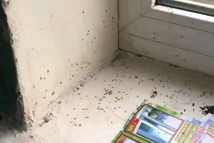 Как уничтожить блох в квартире или доме самостоятельно