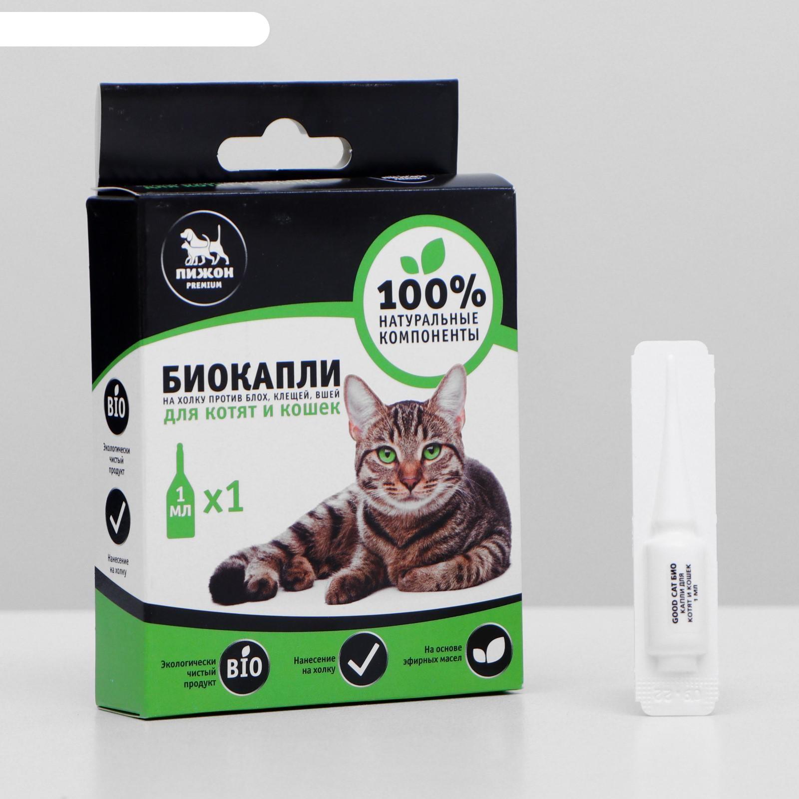 Как выбрать шампунь против блох для кошек и котят