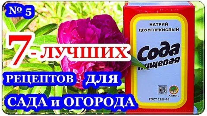 Сода для огорода или сада применение: для огурцов, для томатов, для лука, для капусты, кальцинированная, пищевая, чайной соды