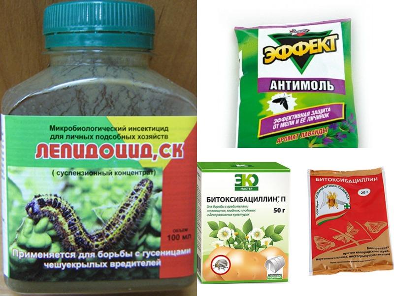 Гусеницы на цветах: как избавиться от вредителей на герани и розе?