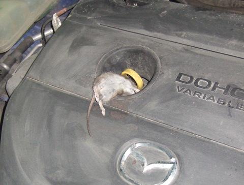 Избавляемся от мышей в гараже