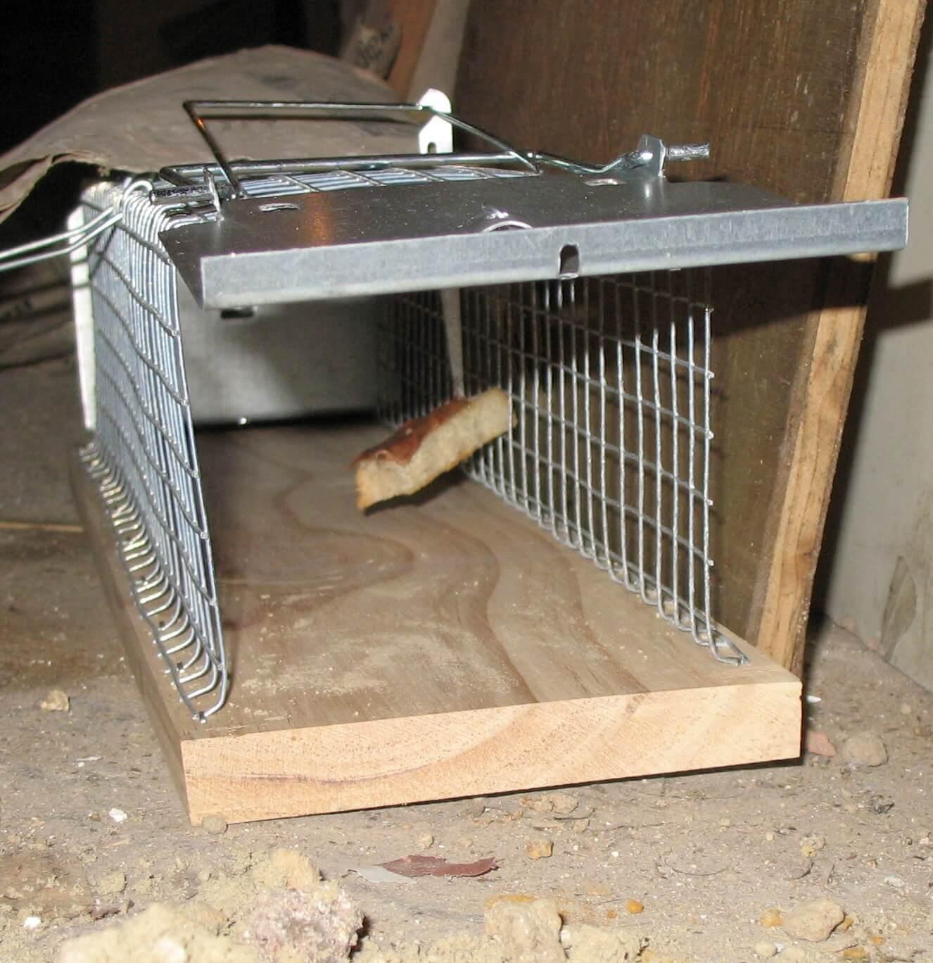 Капканы и ловушки для крыс и мышей