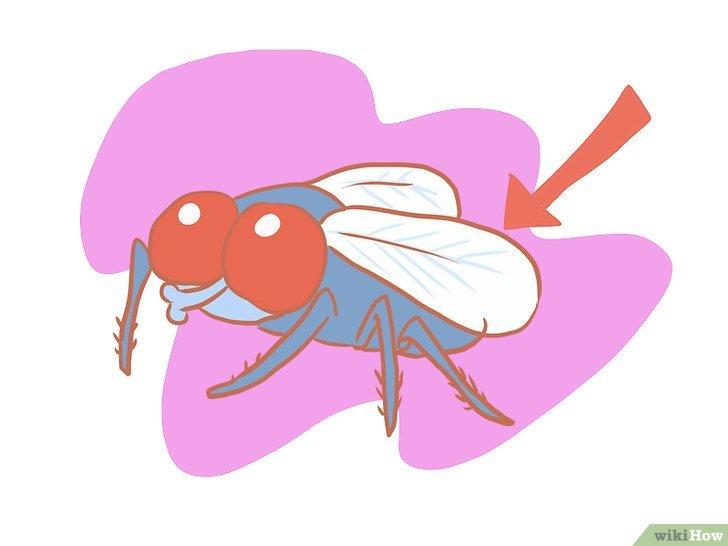 Читать книгу как убить муху (сборник) владимира дэса : онлайн чтение - страница 1