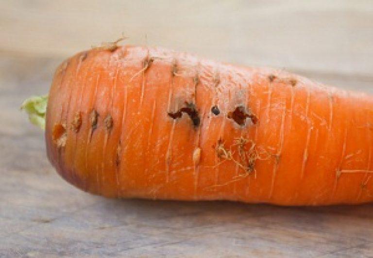 Тля на моркови: как бороться и чем можно обработать, методы борьбы