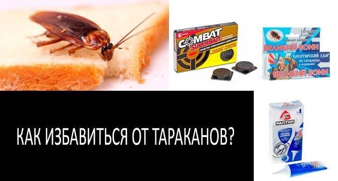Как избавиться от тараканов в общежитии