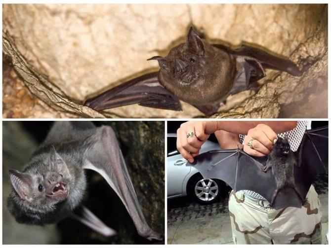 Как избавиться от летучих мышей: правила выведения и 15 лучших средств