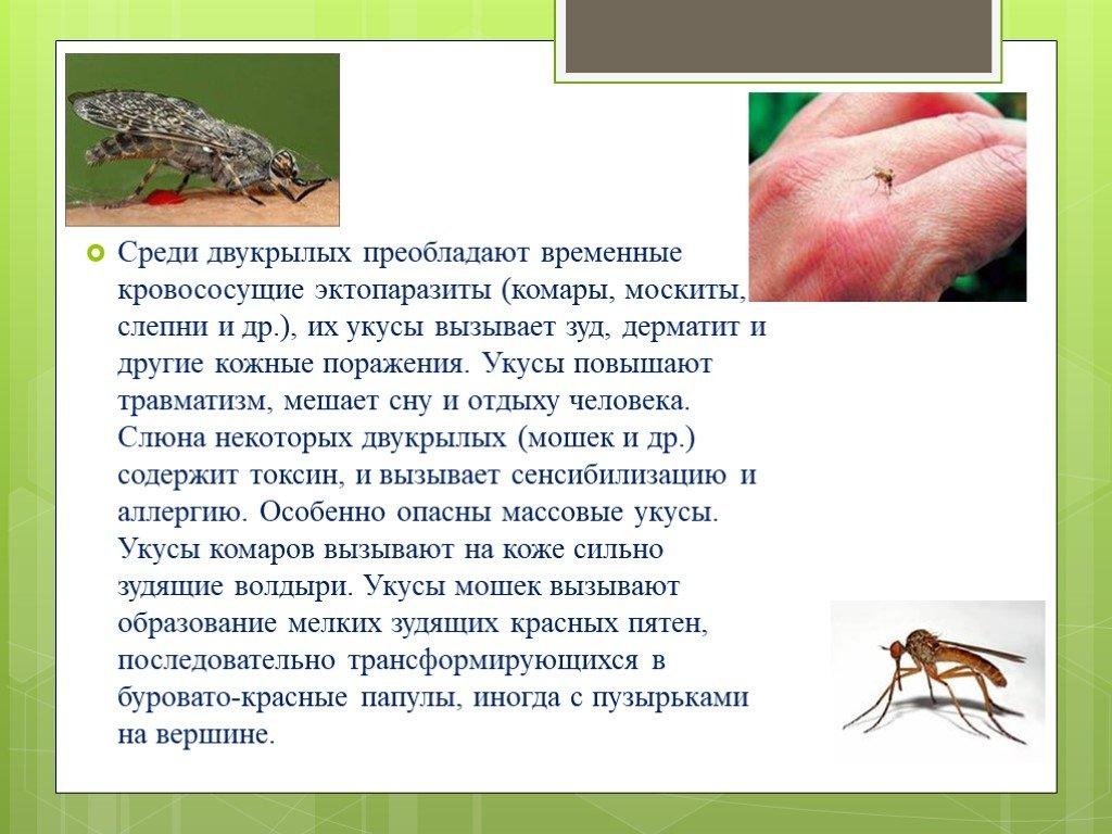 Москиты – фото и описание насекомого