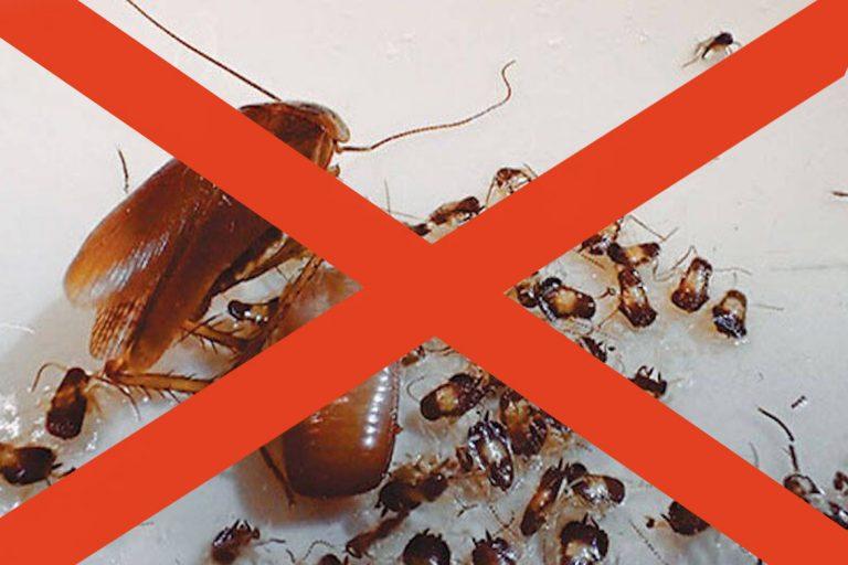 Куда ушли тараканы: возможные причины