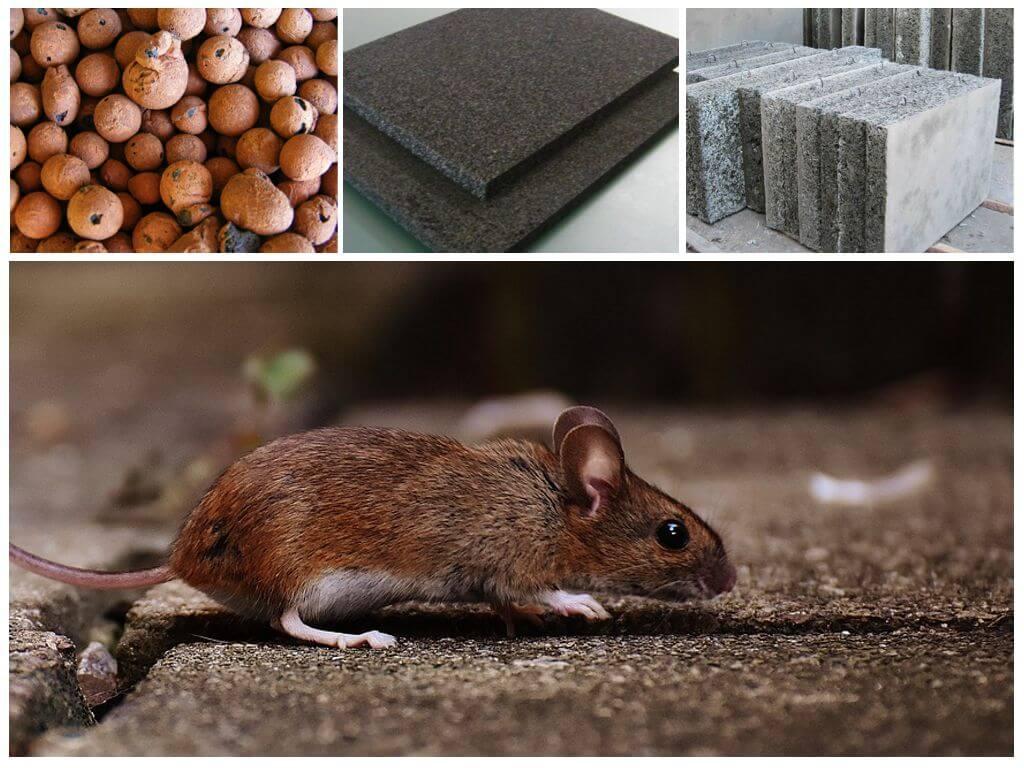 Утеплитель, который не будут грызть мыши и крысы: обзор материалов, характеристики и способы защиты от грызунов
