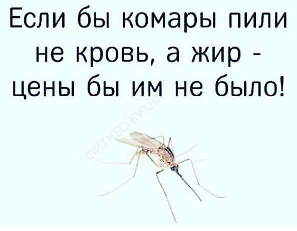 Зачем комары пьют кровь и как это происходит?
