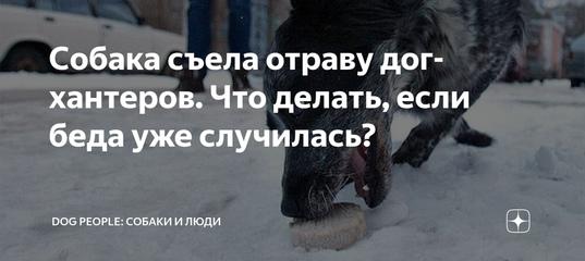 Собака съела крысиный яд – что делать