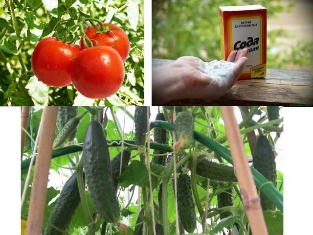 Применение кальцинированной соды в огороде