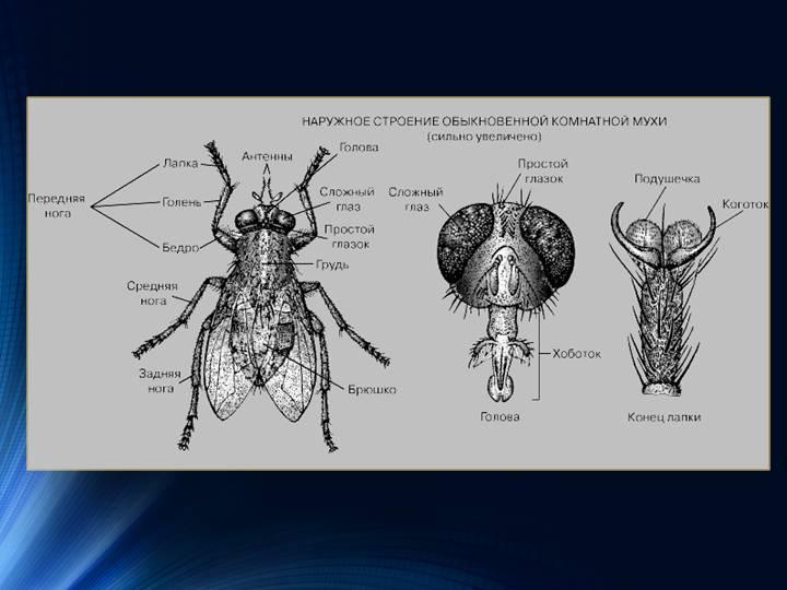 Признаки порчи: мухи