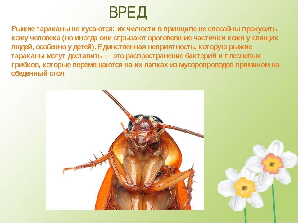 Какие болезни переносят тараканы опасные для человека